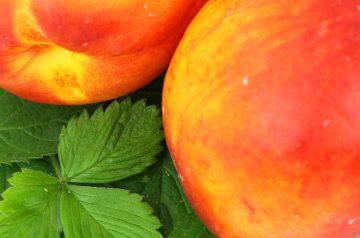 Apricot and Nectarine Salsa