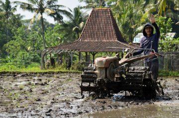 Plough or Plauta (India Rice)