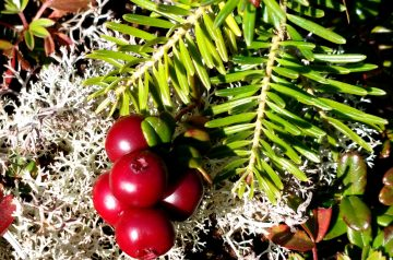 Ida's Cranberry Relish