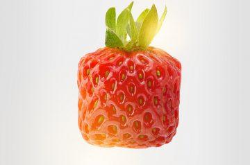 Bayerische Erdbeercreme (Strawberry Barvarian)