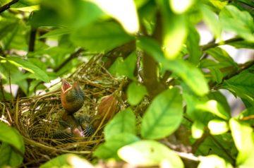 Breakfast Bird's Nest