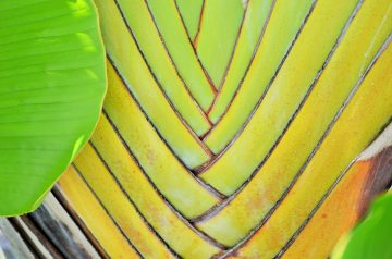 Caribbean Banana Treat!