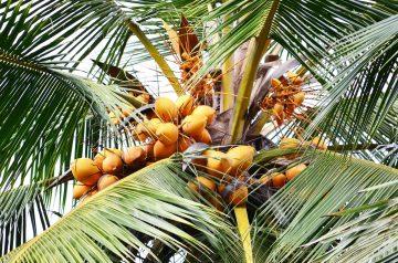 Coconut Blizzard Drink