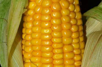 Sweet Gingered Corn