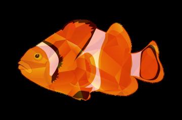 Fish Provencale
