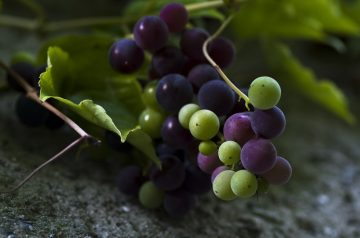 Muscat Wine Sweet Cake With Grapes