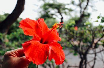 Hawaiian Charoset