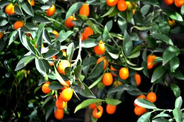 Kumquat's Roasted Artichoke Hearts