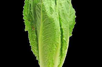 Romaine Strawberry Salad