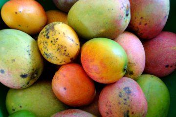 Mango Margarita Smoothie