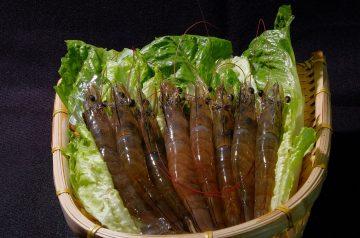Margarita Shrimp and Vegetable Kabobs