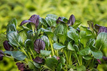 Basil Spinach Salad With Lime Vinaigrette