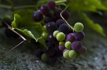 """""""Sugared Grapes"""""""