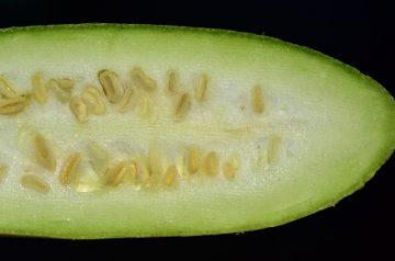 Summer Cucuzza Salad