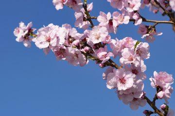 Cherry Almond Meringues