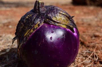Antipasto Di Melanzane (Eggplant Appetizer)
