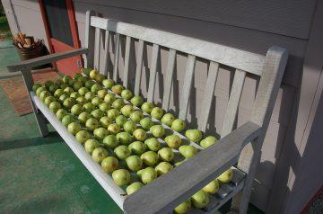 Glazed Pears
