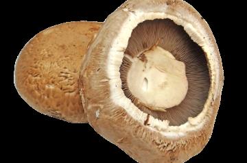 Fried Portabella Mushroom Strips