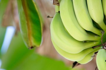 Banana Spice Bars